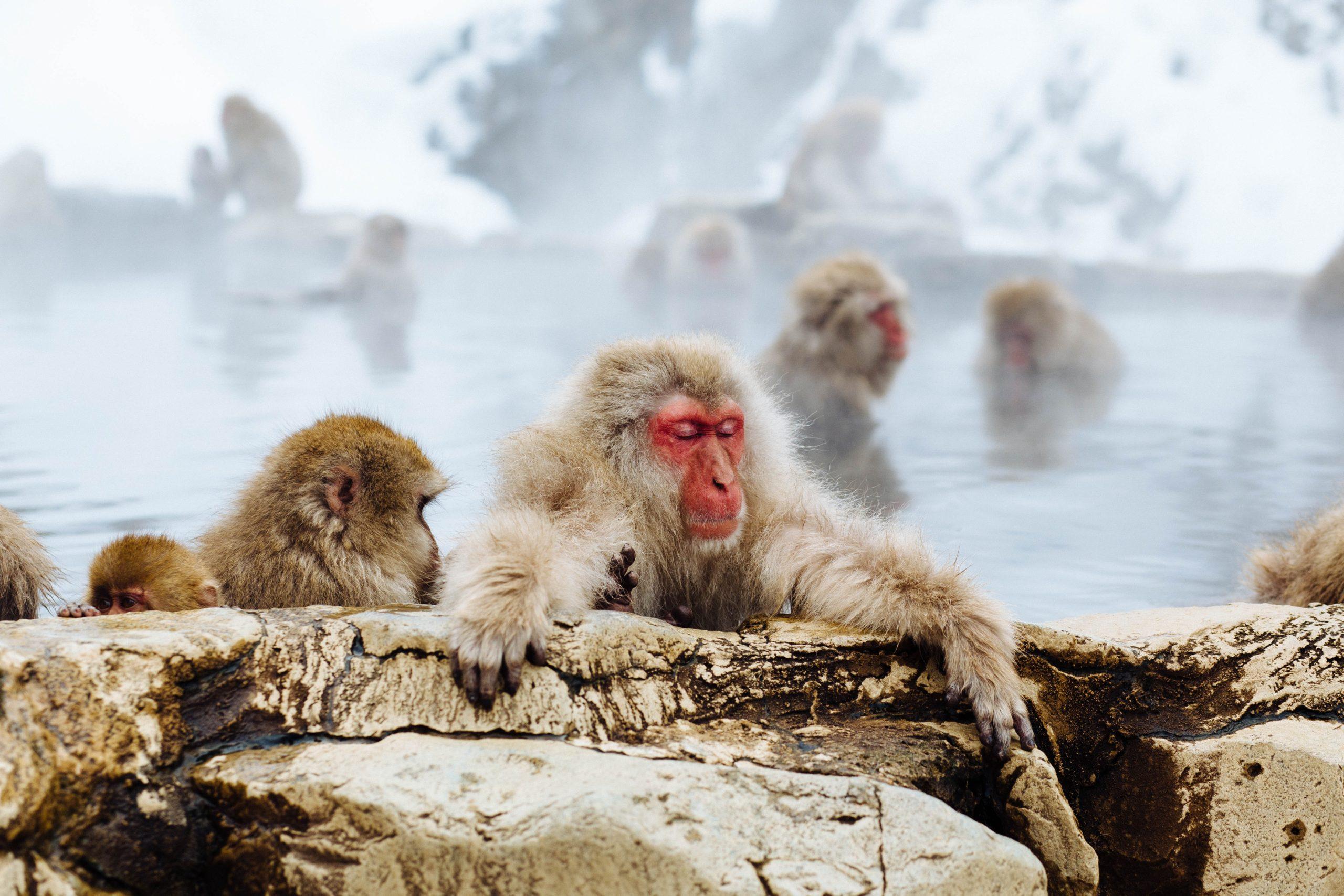 蔵王】日本の温泉遺産百選、遠刈田温泉の竹泉荘に癒される。