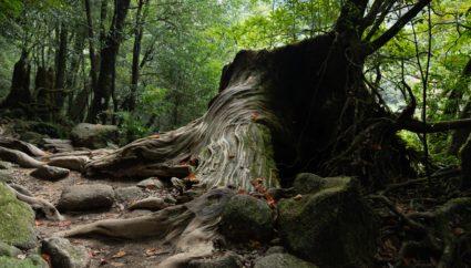 屋久島で人気のホテル4選!ゆったりと寛げる、癒しの旅を提供してくれるオススメの宿