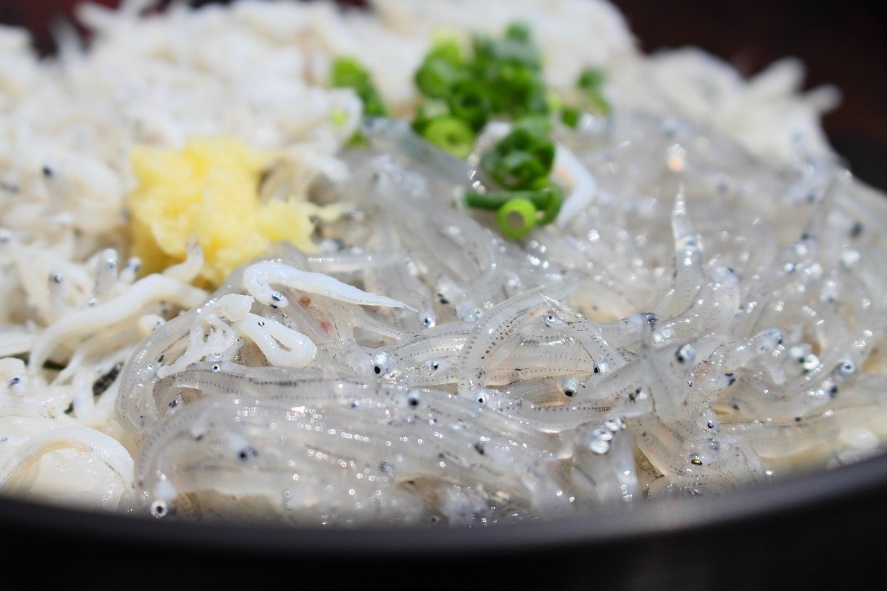 生しらす丼ならやっぱり江ノ島・鎌倉!超絶品が味わえるオススメのお店まとめ