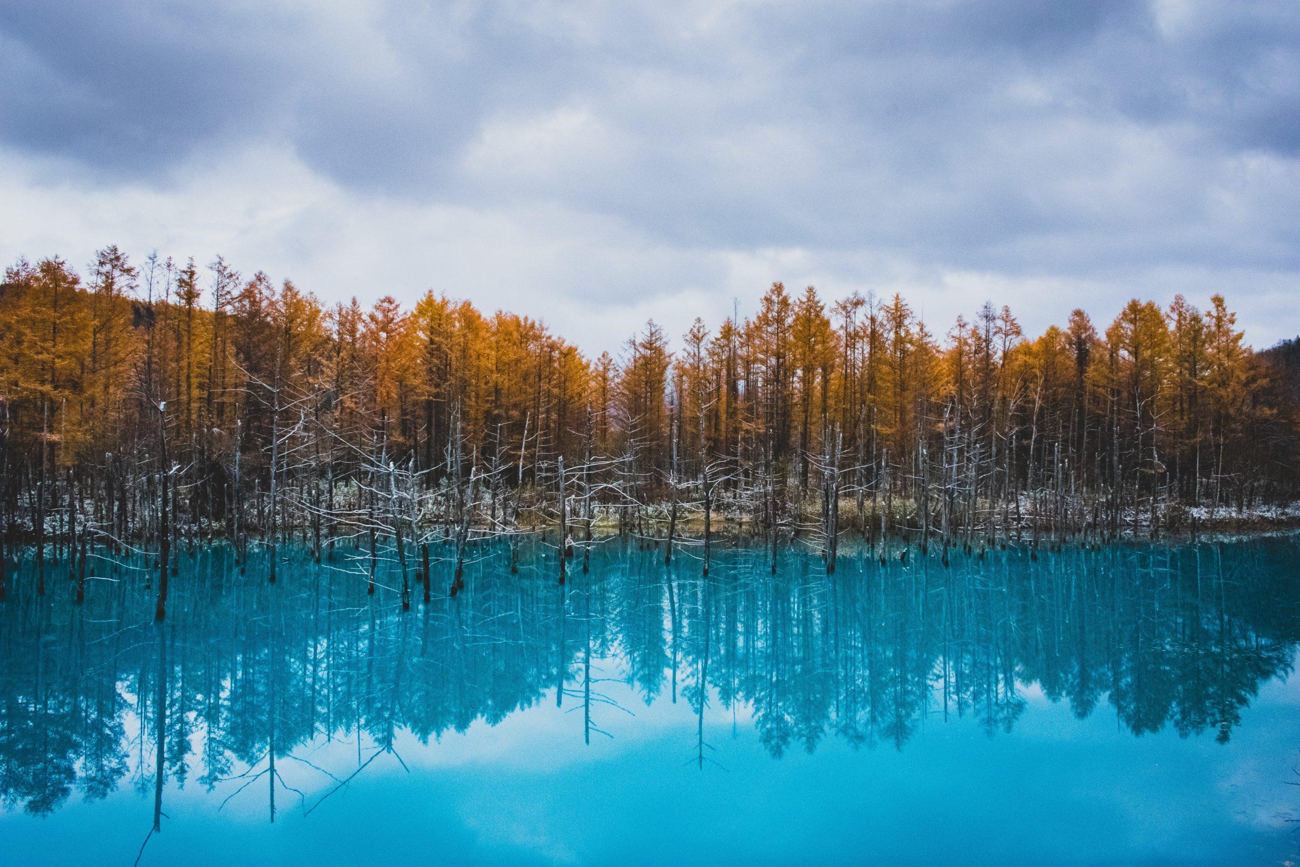 【絶景】美瑛の青い池。自然の色とは思えない、鮮やかなコバルトブルーが神秘的