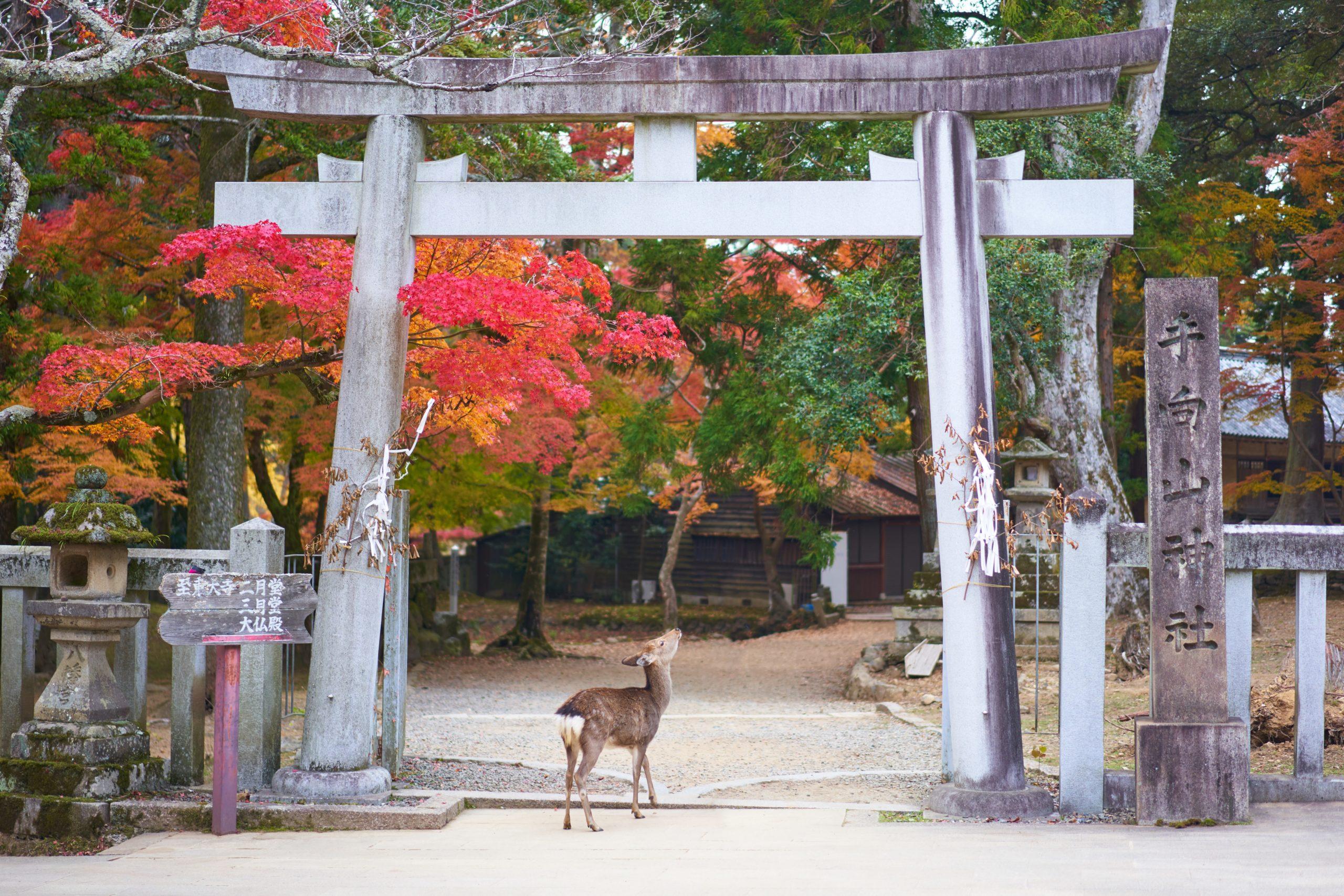 素敵な一夜を過ごせる!古都奈良のおすすめ宿まとめ
