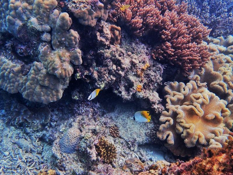 奄美大島サンゴ