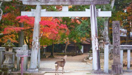 介護旅行ねっと-奈良