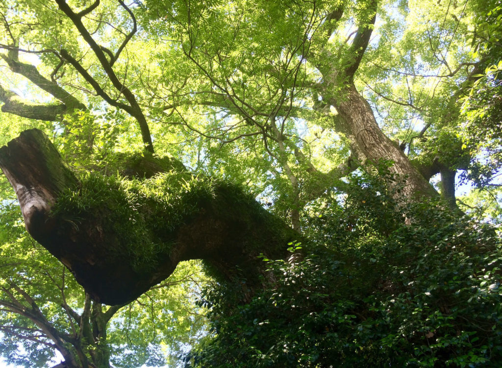 熱田神社の自然