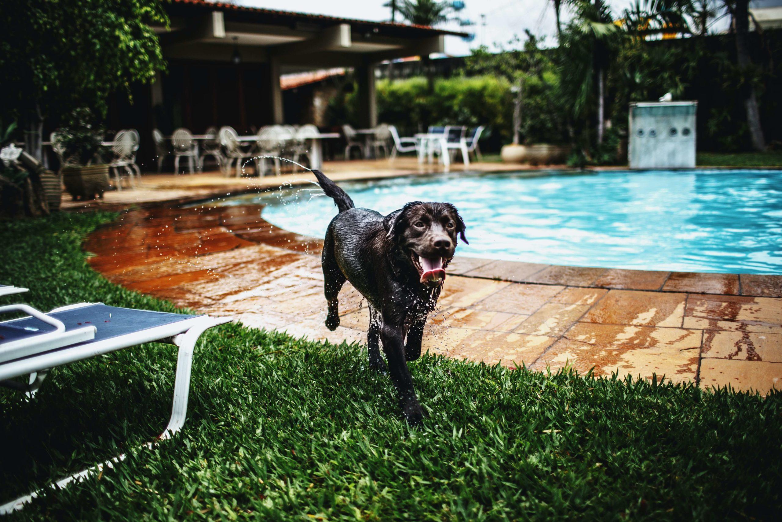 軽井沢でペット同伴OKのホテル5選。愛犬と一緒に旅に出よう!