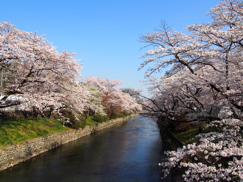 春は桜の名所!羽村市にある「羽村の堰」について