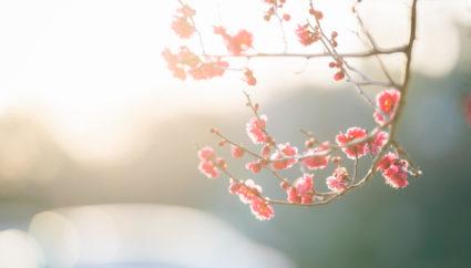 花開く梅の中を歩きたい♪九州の観梅の名所まとめ