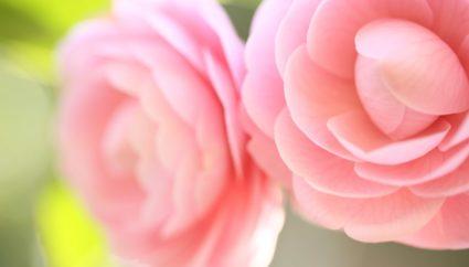 htt東京観光 > 東京の町田市にある「町田ぼたん園」について。春にたくさんの牡丹を見ようp://www.barrierfree-machida.com/cgi-bin/DBsearch2.cgi?Rest_SW=1&SNO=02&TNO=02&SID=204