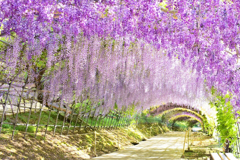 北海道観光 > 美瑛観光 > 春にこそ最高の絶景を!春休み行きたい観光スポット7選